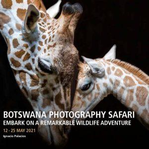 Botswana Luxury Photography Safari and Tour 2021