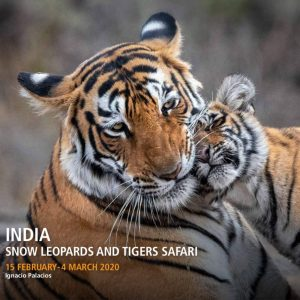 India Photography Tour 2020 featuring Snow Leopards and Bengal Tigers