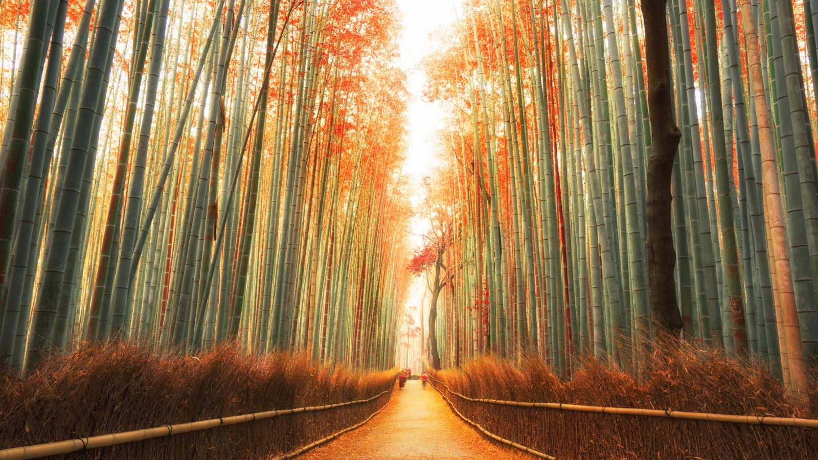 Japan in Autumn Photography Tour Arashiyama Bamboo Forest