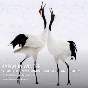 Japan in winter snow monkeys and red cranes with award winning photographers Ken Duncan and Ignacio Palacios