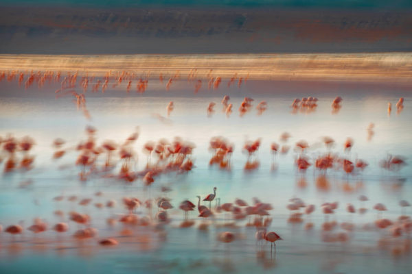 Flamingos on the Laguna Colorada, Altiplano. Captured with a ten stops filter.